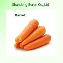 2015 Shandong Mejor Precio Zanahoria Fresca