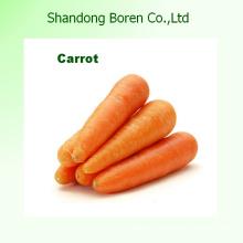 Carottes de haute qualité aux légumes surgelés
