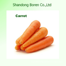 Grade a Size M/L High Quality Fresh Carrot