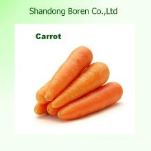 Сорт a Размер M / L Высокое качество Свежий морковь
