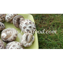 Marcas de cogumelos, flor branca Shiitake, vegetais saudáveis