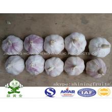 Ajo Blanco Blanco Nuevo Cultivo 2016 De China Continental