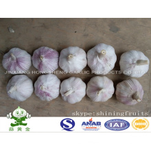Normal White Garlic New Crop 2016 From Chinese Mainland