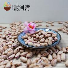 Bien choisir les haricots mous légères, type HPS, nouvelle récolte