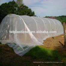 Película de cubierta de casa verde para tomate