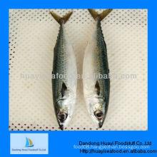 frozen mackerel fish(size:300-500)