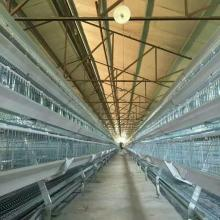 SHINE Chicken Cages untuk Sistem Layer Cage