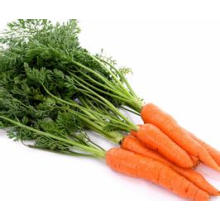 Organic Fresh Carrot from China