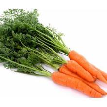 Cenoura fresca orgânica da China