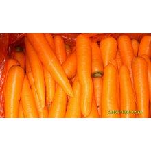 Cenoura fresca