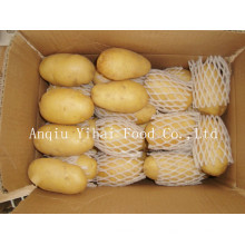 Meilleure qualité Nouvelle récolte Holland Potato