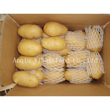 Batata de alta qualidade da colheita nova de Holland