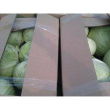 Fresh Flat Cabbage
