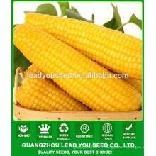 Prix de maïs jaune NCO06 Ziyi F1, usine de graines de maïs