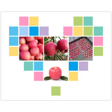 2015 Новый урожай Fresh FUJI Apple