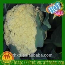 Seta de coliflor y semilla de coliflor fresca
