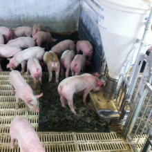 Good Quality Fiber Reinforced Wean Farrowing Rearing Warm Pig Sow Feed Save Rubber Mat
