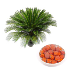 Quality 2019 fresh harvest tropical ornamental plants cycas sago palm seeds
