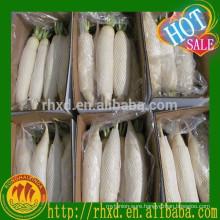 Fresh China White Radish Price