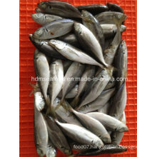 Good Quality Frozen Japanese Jack Mackerel Fish