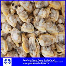 Boiled baby clam meat for sale