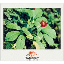 Chinese Tienchi Ginseng Herbal Notoginseng Extract