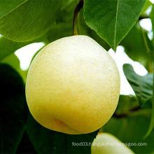 Fresh Ya Pear New Crop for Sale