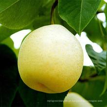 Fresh Ya Pear New Crop para venda