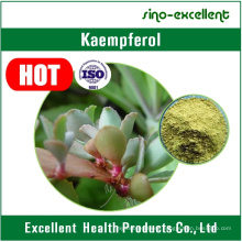 Natural Sophora Japonica Extract Powder Kaempferol