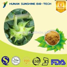 Здоровый Анти-атеросклероз продукт сапонины tribulus terrestris экстракт порошок 20% / 40% / 70% / 90% сапонины