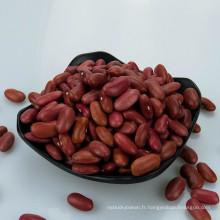 Meilleure vente Petits haricots rouges