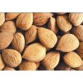Bitter Apricot Kernels, Chinese Organic Almonds