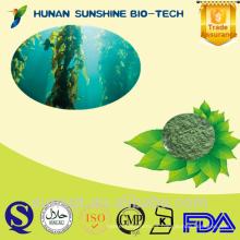 Suministro de extracto de algas marinas Bladderwrack Seaweed / bladderwrack powder / bladderwrack pe