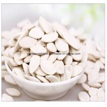 Chinese New Crop Snow White Pumpkin Seeds Factory