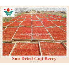 Sun Dired Goji Berry y Wolfberry exportados