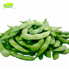 China Bulk Wholesale Distribute IQF frozen soya beans