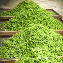 China New Product for Green Tea Green tea health benefits supply to French Polynesia Importers