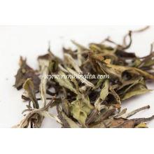 Thé blanc Yue Guan Bai
