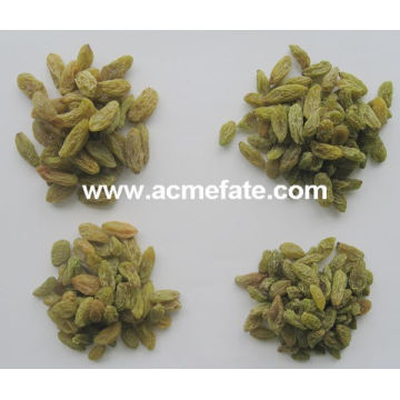 China suppliers best price green raisin from xinjiang
