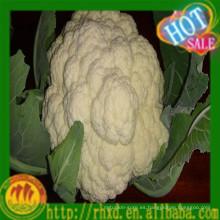 Venta caliente de la coliflor fresca de China 2015 / precio blanco del bróculi / de la coliflor