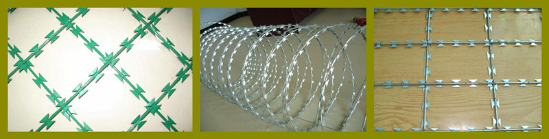 razor barbed wire photo