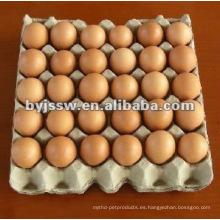 Bandeja de huevo de celulosa de papel de 30 celdas