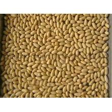 Blanchierte Erdnüsse von guter Qualität