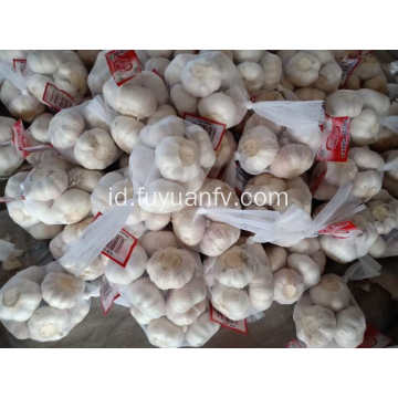 5,5cm bawang putih putih normal