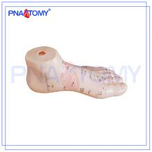 ПНТ-AM26 модель Акупунктурой нога человека анатомические модели 15см
