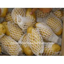 Frische chinesische Kartoffel