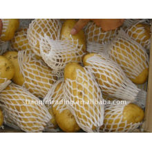 Pomme de terre chinoise fraîche