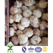 Fresh Normal White Garlic 5.5cm 10kgs Loose Carton