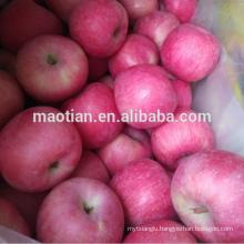fresh apple fruit From China Producer