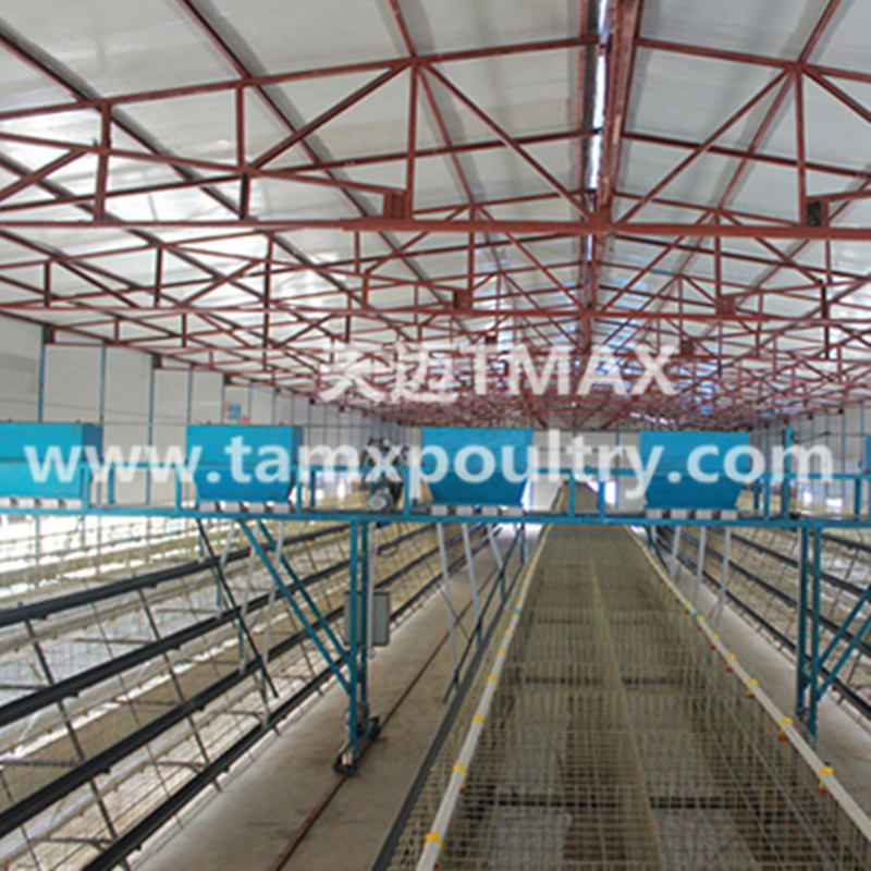 Automatic Chicken Cages